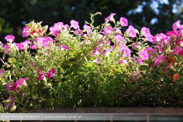 Balkon Graz Blumen
