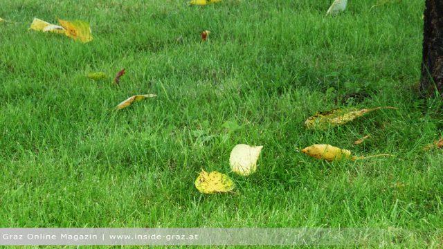 Verbot Laubbläser Laubsauger Blätter