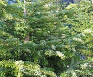 Weihnachtsbaum Graz