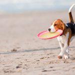 Urlaub mit dem Hund – Wichtige Tipps für die Reise