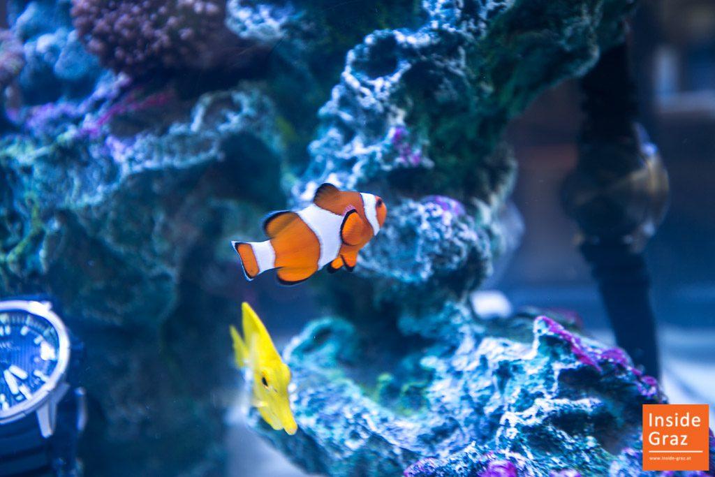 Aquarium Graz
