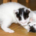 Katze in der Wohnung halten – Tipps