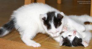 Katzen Haltung in der Wohnung
