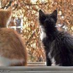 Ersetzt Liebe zum Haustier die Freiheit der Katze?