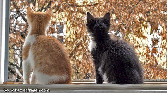 Katzen Fenster Aussicht