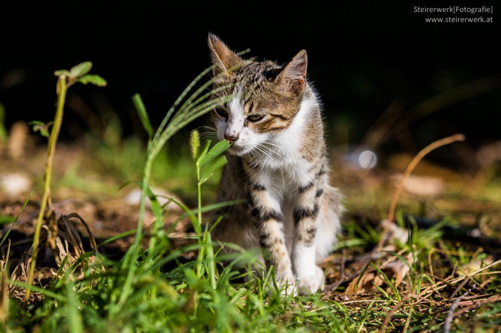 Zeckenschutzmittel Katze