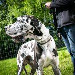 Zeckenschutzmittel für Hunde und Katzen im VKI Test