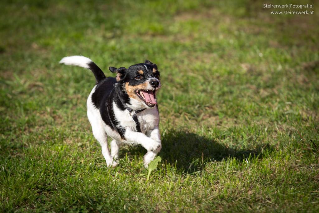 Wettrennen beim Grazer Hundefest