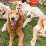 Grazer Hundefest – Fotos