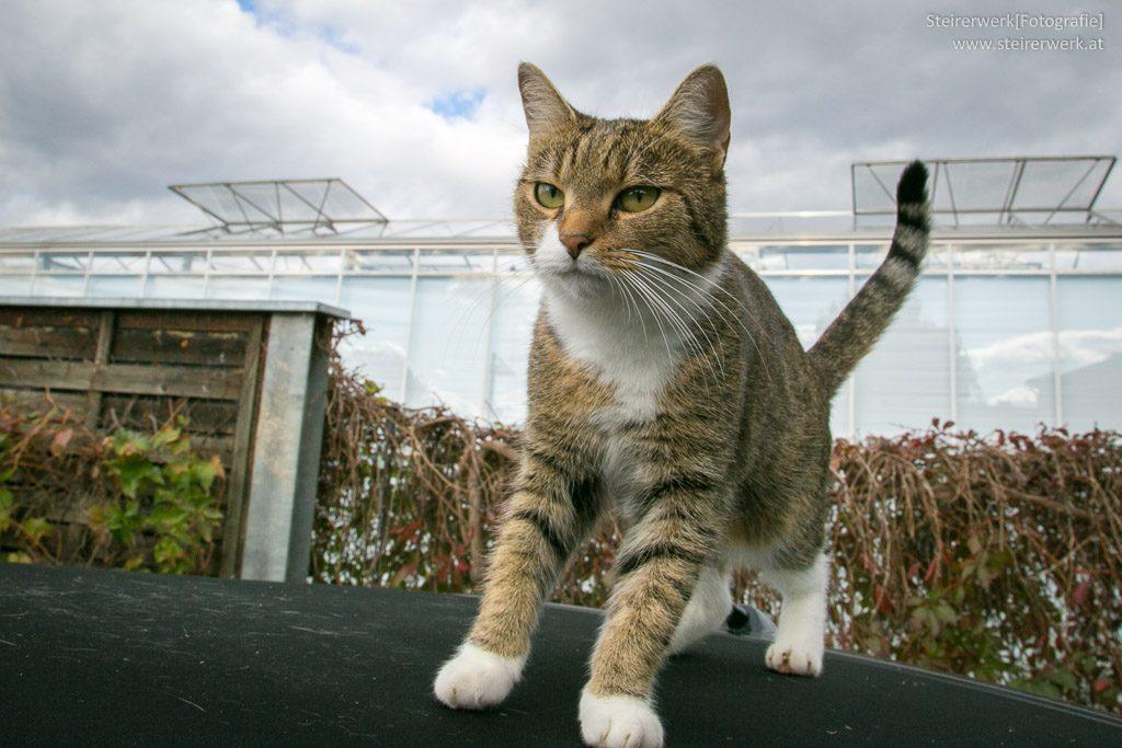 Katze am Autodach