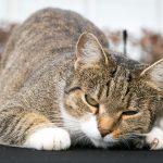 Den passenden Katzennamen für sein Haustier finden