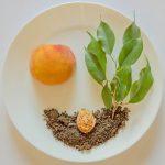 Gütesiegel-Check für Lebensmittel: Was bringen diese wirklich?