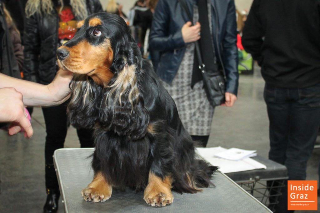 Hund IHA Graz
