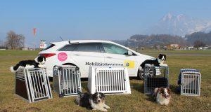 Hundeboxen Test
