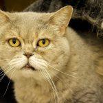 Seniorkatzen: Tipps für den Umgang mit der alternden Katze