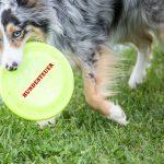Graz schafft Hundesteuer ab