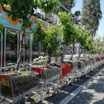 Urban Gardening mit Permakultur