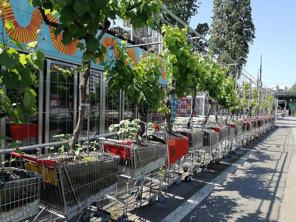 Urban Gardening Einkaufen