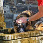 Wie schütze ich mein Haustier vor der Hitze?