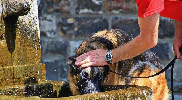 Haustiere Hitze schützen