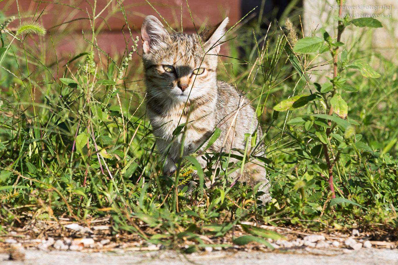 Katze entlaufen Ratgeber