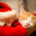 Haustiere als Geschenk?