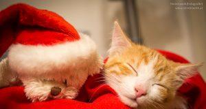 Tier Weihnachten Geschenk