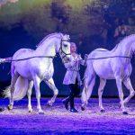 Cavalluna Welt der Fantasie Pferde Graz