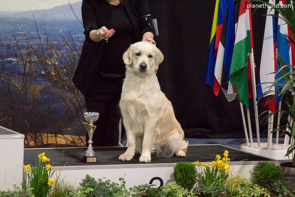 IHA Graz Golden Retriever