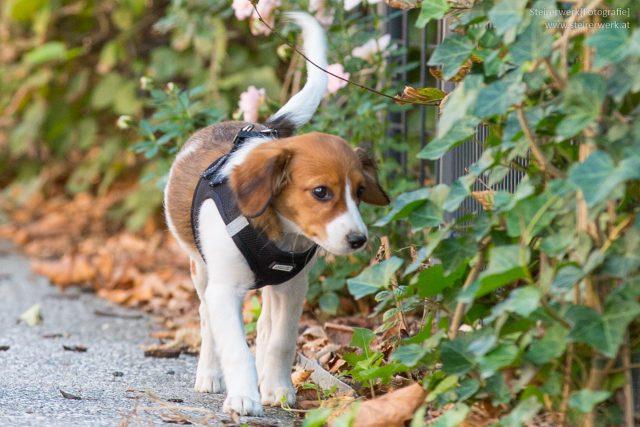 Hunde in Graz