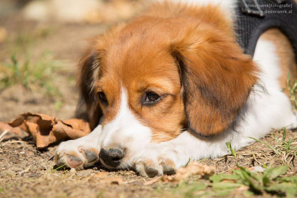 Hundehaltung Graz