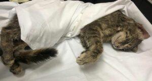 Katze Polizei sucht Zeugen
