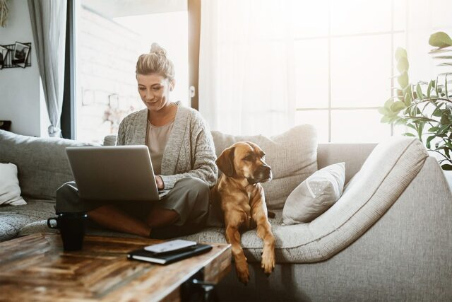 Home Office mit Hund Tipps