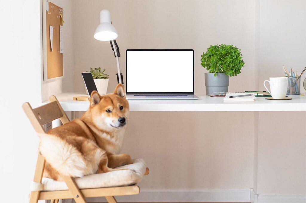 Hund am Schreibtisch