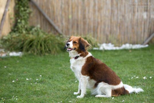 Idealer Garten für Hunde