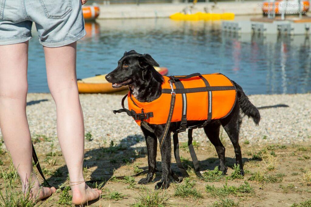 Schwimmweste für den Hund