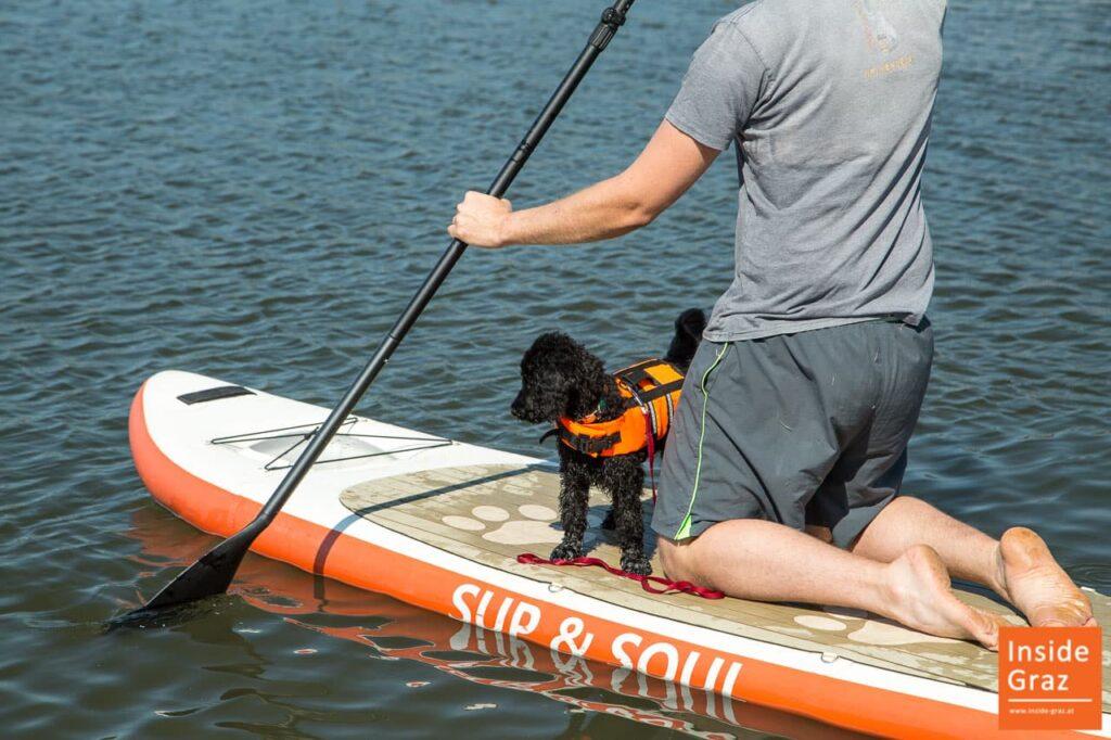 SUP Board mit Hund