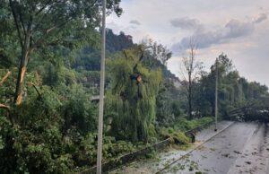 Unwetter entwurzelte Bäume in Graz