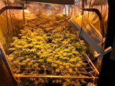 Sicherstellung Marihuana